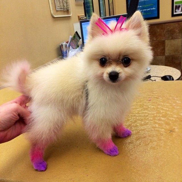 Add A Little Color To Your Pet S Day With Petexpressions Chalking