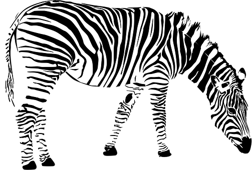 Zebra Africa Animal Black And White Z Zebra Clipart Zebra Zebra Print Decor
