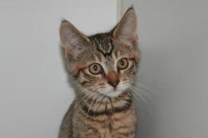 Pet Adoption Events Near You Adopt A Dog Cat Or Rabbit Today Pet Adoption Event Dog Adoption Pet Adoption