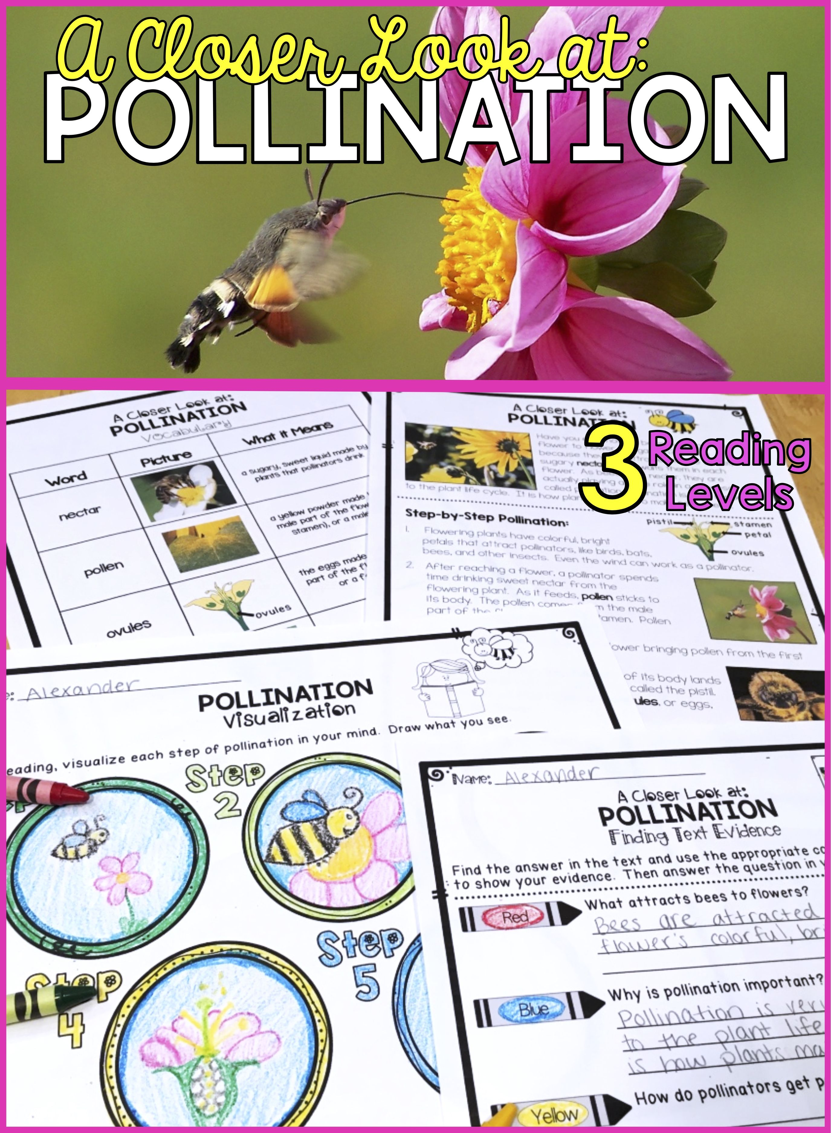 Plants Differentiated Pollination Reading Passage Vocabulary Comprehension Reading Passages Third Grade Science Lessons Pollination Lessons [ 3750 x 2750 Pixel ]