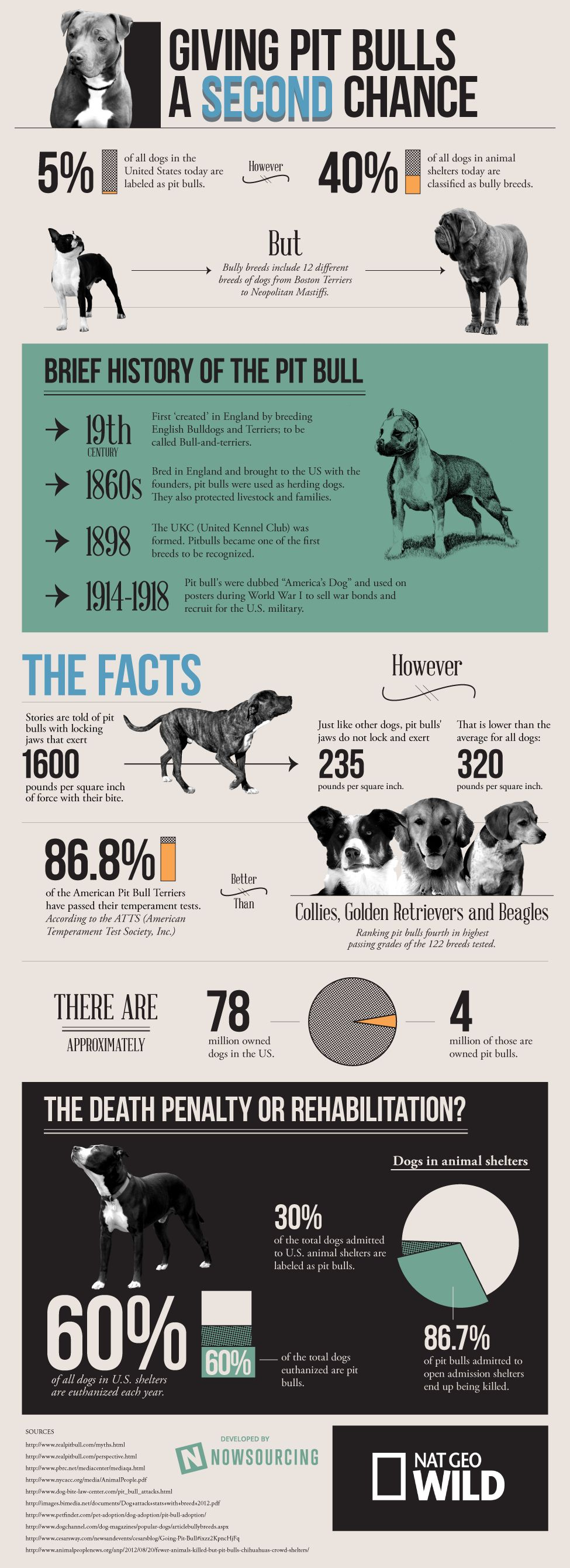 Pitbull Awareness People Need To Seriously Be Educated Before