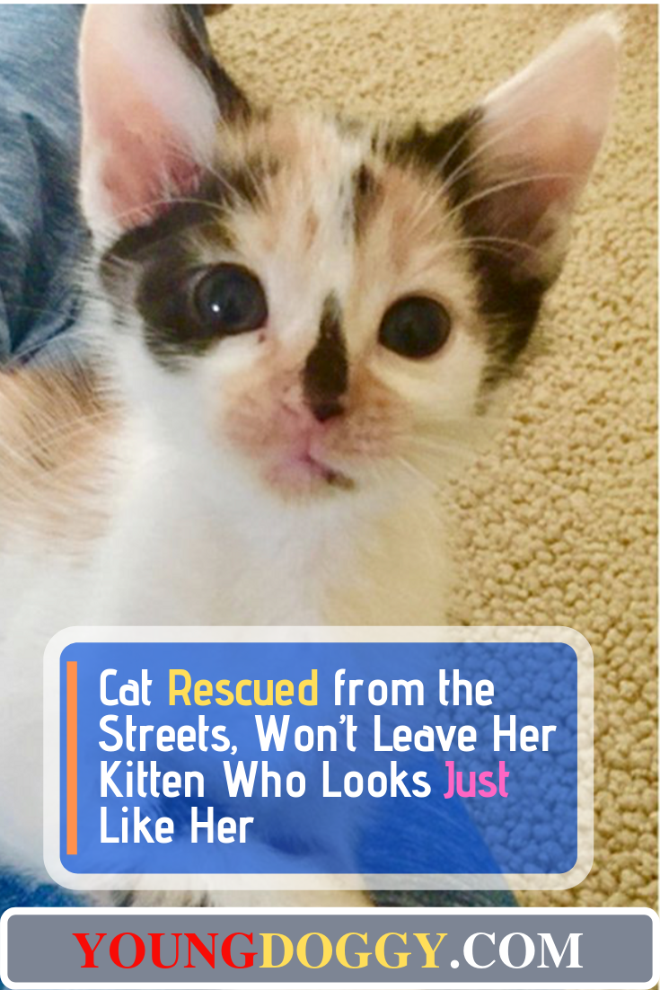 Cat Rescued from the Streets, Won't Leave Her Kitten Who Looks Just Like Her #animalrescue