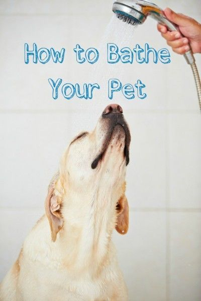 Want to know how to bathe your pet? Follow these tips when giving your dogs, cats, bunnies, and other furry friends a good bath.