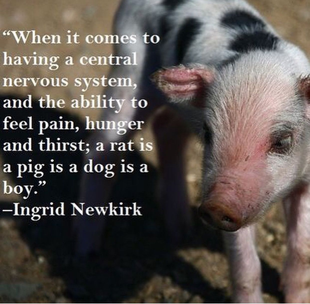 Pin by Pamela S. on Compassion for Animals Be a nice