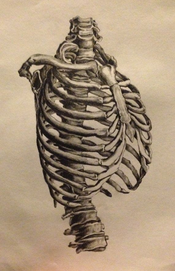 ORIGINAL non print- 9x12 realistic drawing of human ribcage and ...