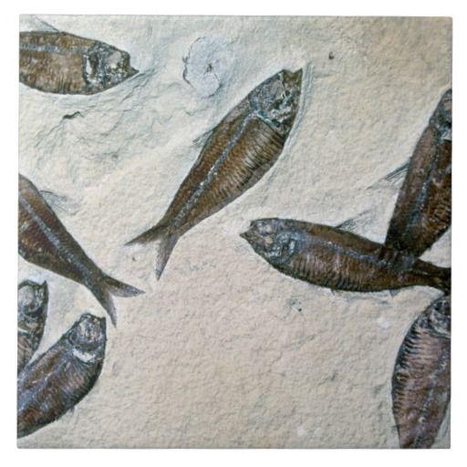 Fish Fossil 4 Ceramic Tiles:  ImageID: TB003369 / Tom Bean / CORBIS / Fish Fossil   #fish #fossil #ceramictile #tiles