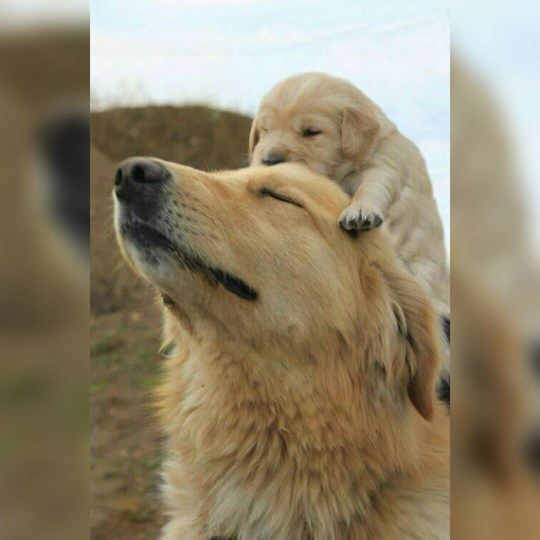 #dog #pet #dogsofinstagram #petsofinstagram #instapet #instadog #dogsgram #petsgram #dogstagram #petstagram #cutedog #cutepets #doglover #petlover #ilovedogs #ilovepets  #puppy #puppiesofinstagram #puppiesgram #instapuppy
