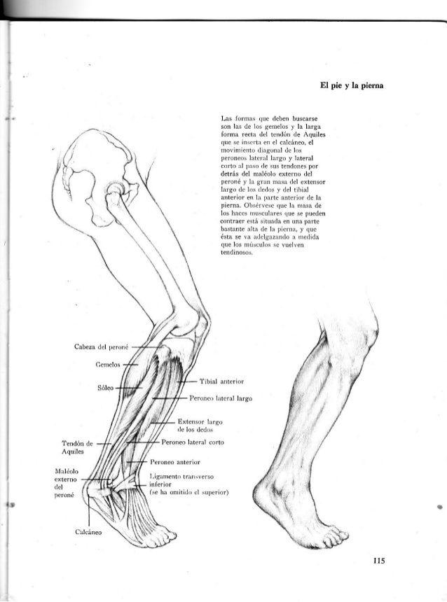Anatomia-artistica-dibujo-anatomico-de-la-figura-humana | Anatomia ...