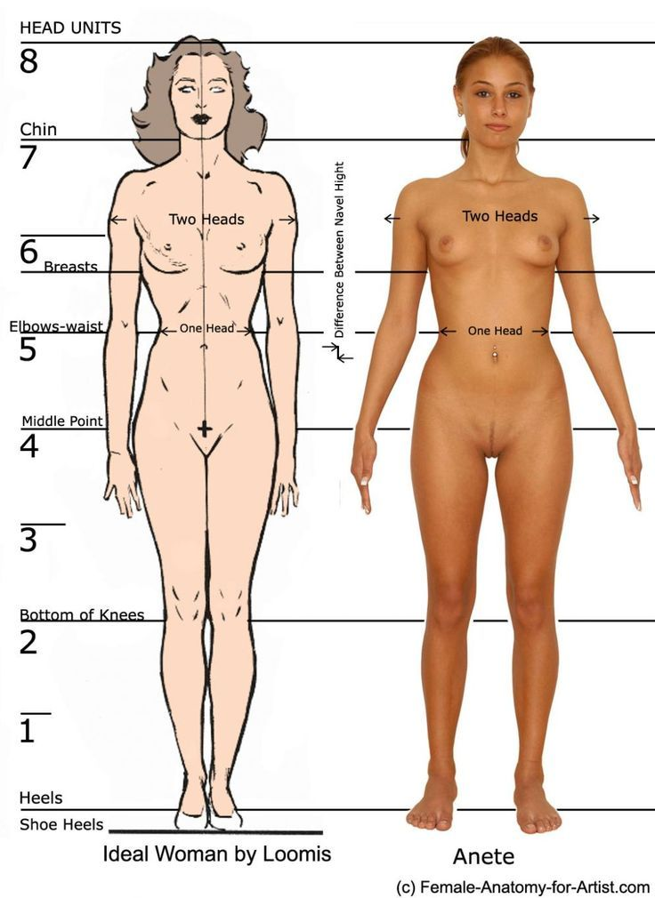 female proportions - Google Search | Art Reference | Pinterest | Art ...