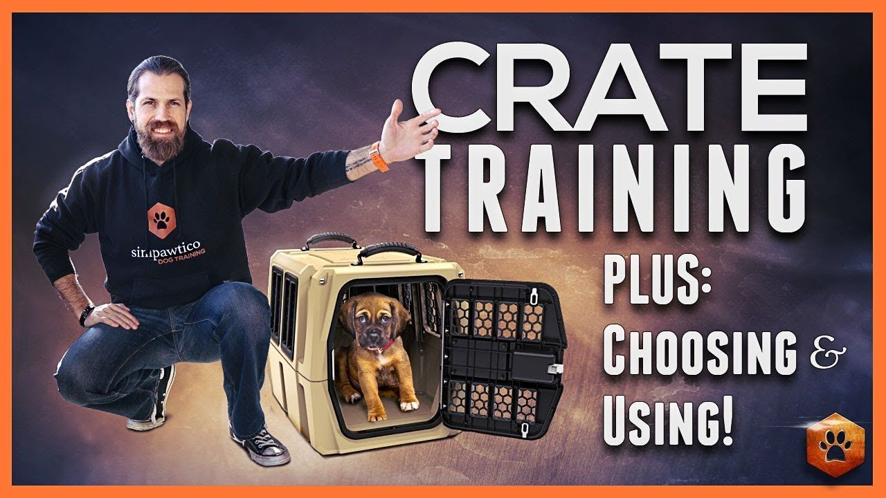 Crate Training Why And How To Do It Youtube Doggos And