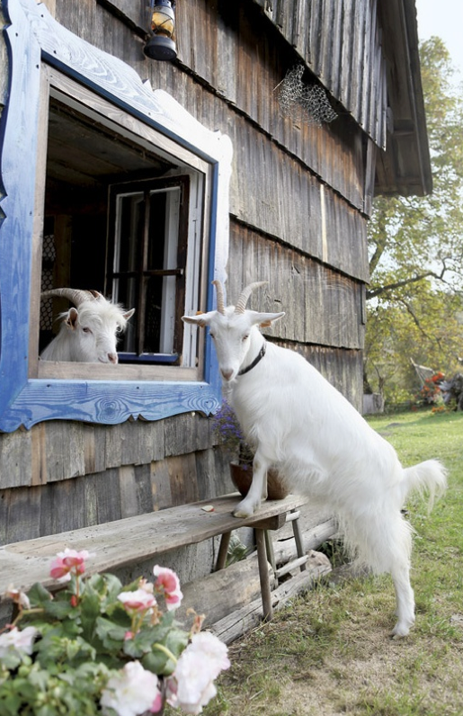 Pin Von Marianne Auf Country Bumpkin Bauernhof Tiere Tiere Lustige Tiere