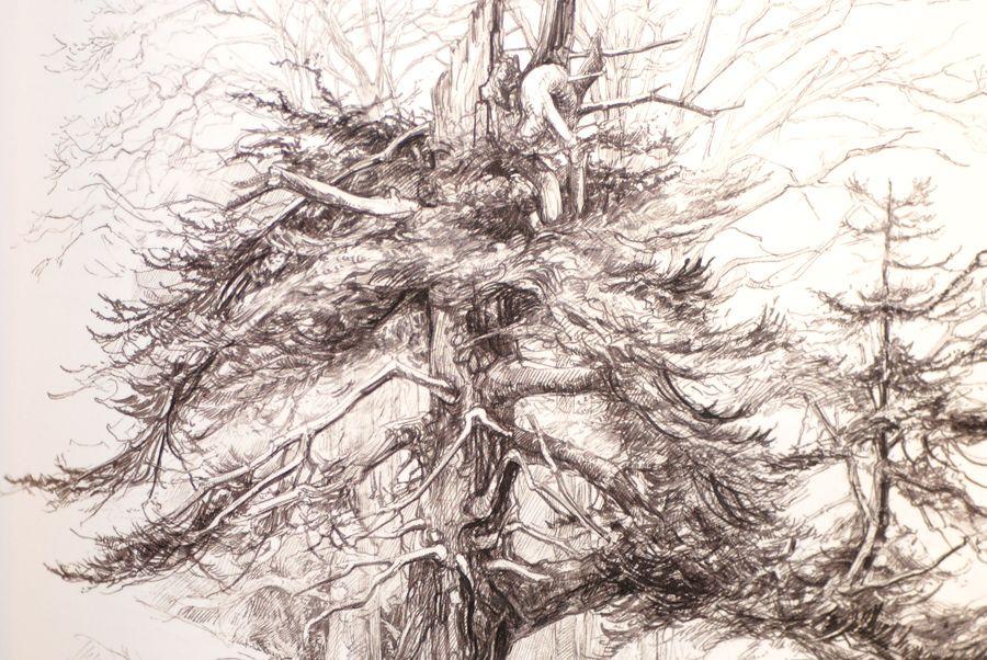 Botany for the Artist Sarah Simblet | from BOOKs | Pinterest ...