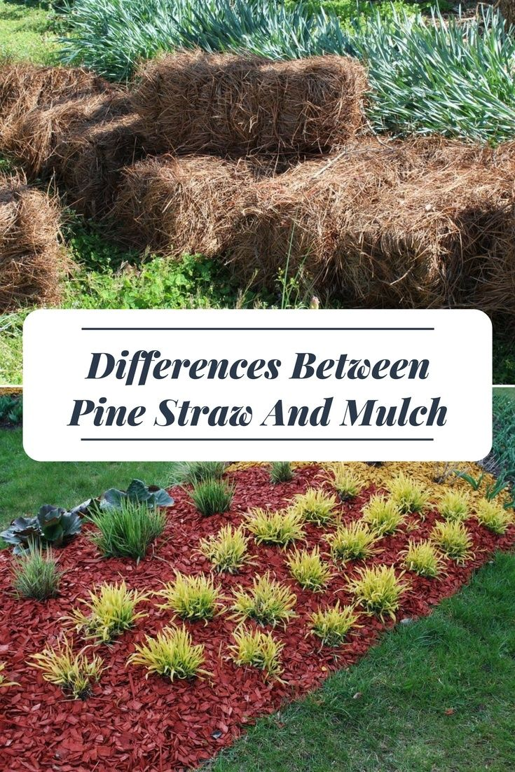 Differences Between Pine Straw And Mulch Pine Straw Landscaping Mulch Landscaping Mulch