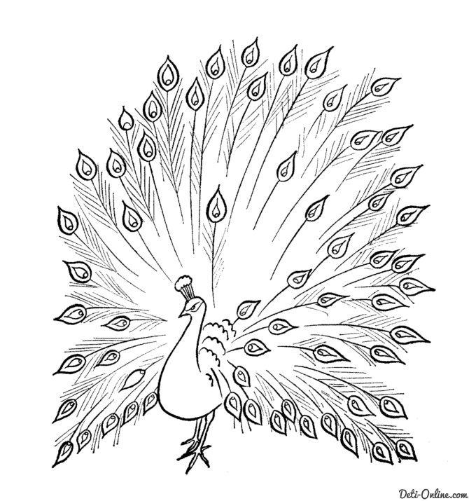 Kartinki Po Zaprosu Raskraska Popugai Kotoruyu Mozhno Raskrasit Dlya Vzroslyh Peacock Coloring Pages Peacock Drawing Coloring Pages