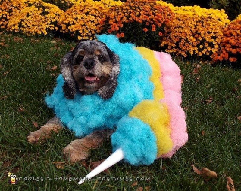 Awesome Cotton Candy Homemade Halloween Dog Costume Dog