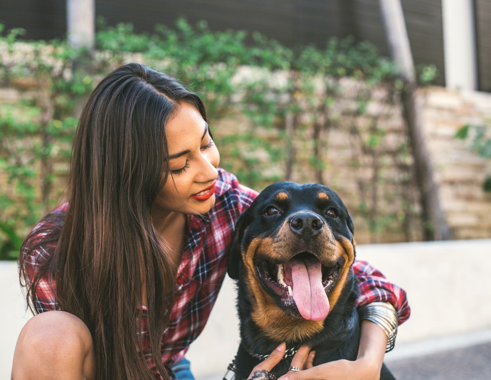 Dogs Make Us Happier, and Now We Know Why Rottweiler