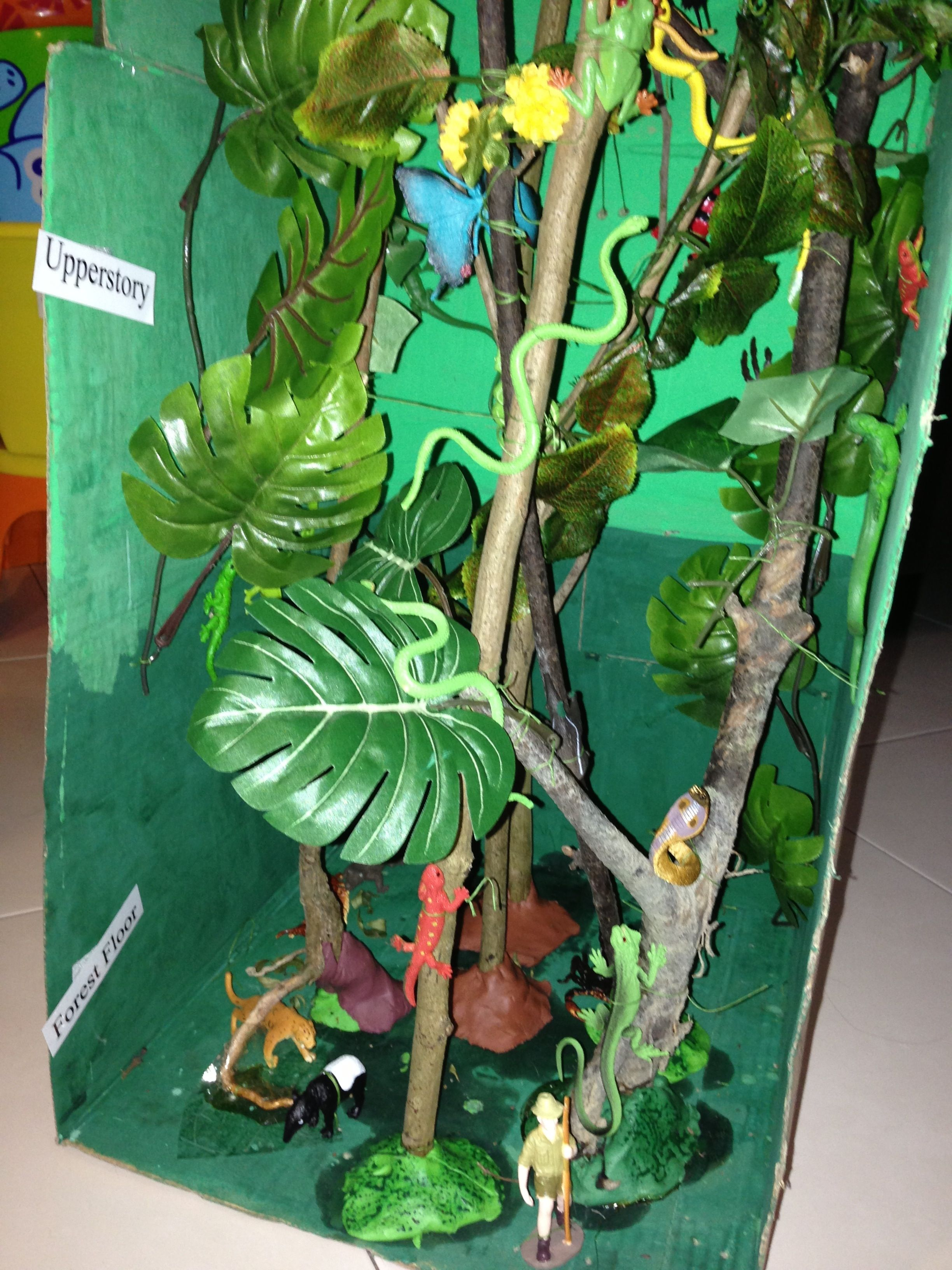 creating trees for a rainforest biome box - Google Search | School ...