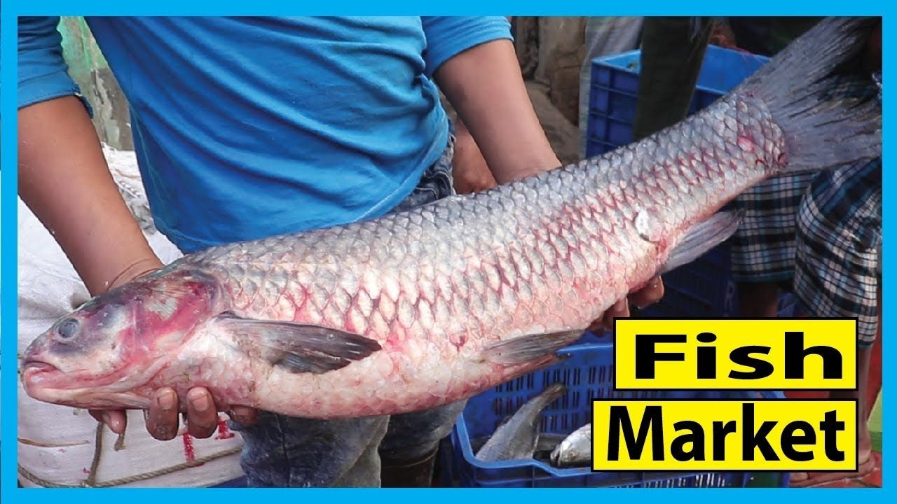 Fish Market In Barisal Fish Market Near Me Fish Corn Fish Barisal Happy Fishing