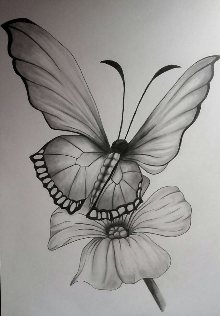 Pin By Natalia Paez On Art Drawings Flower Art Drawing Pencil Drawings Of Flowers Butterfly Sketch