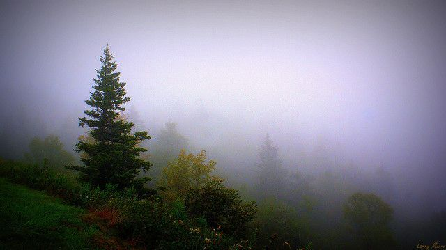 Into The Fog #blueridgeparkway Into The Fog | Flickr - Photo Sharing! Blueridge Parkway in North Carolina #blueridgeparkway