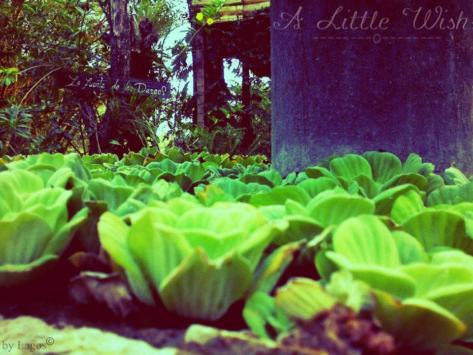 A Little Wish (#byMe)  La vida se basa en puros deseos