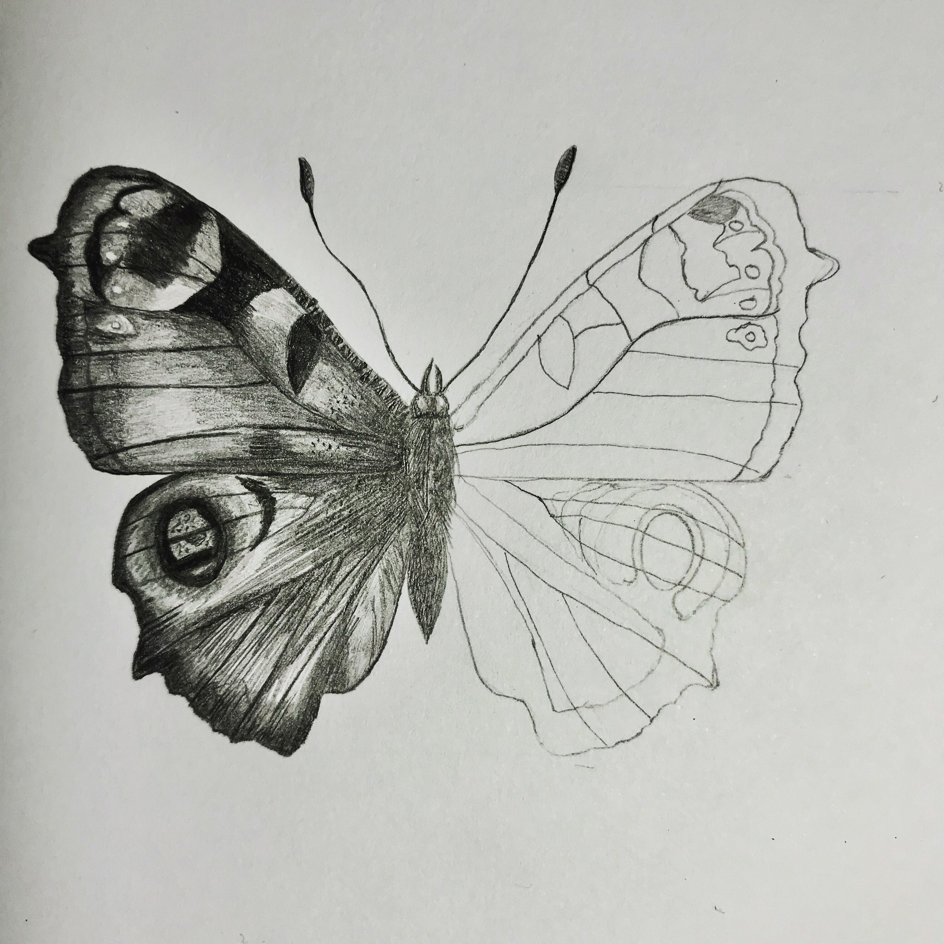 Pin By Ivy Newport Artist Creat On Potential Cards Realistic Butterfly Tattoo Butterfly Drawing Butterfly Tattoo