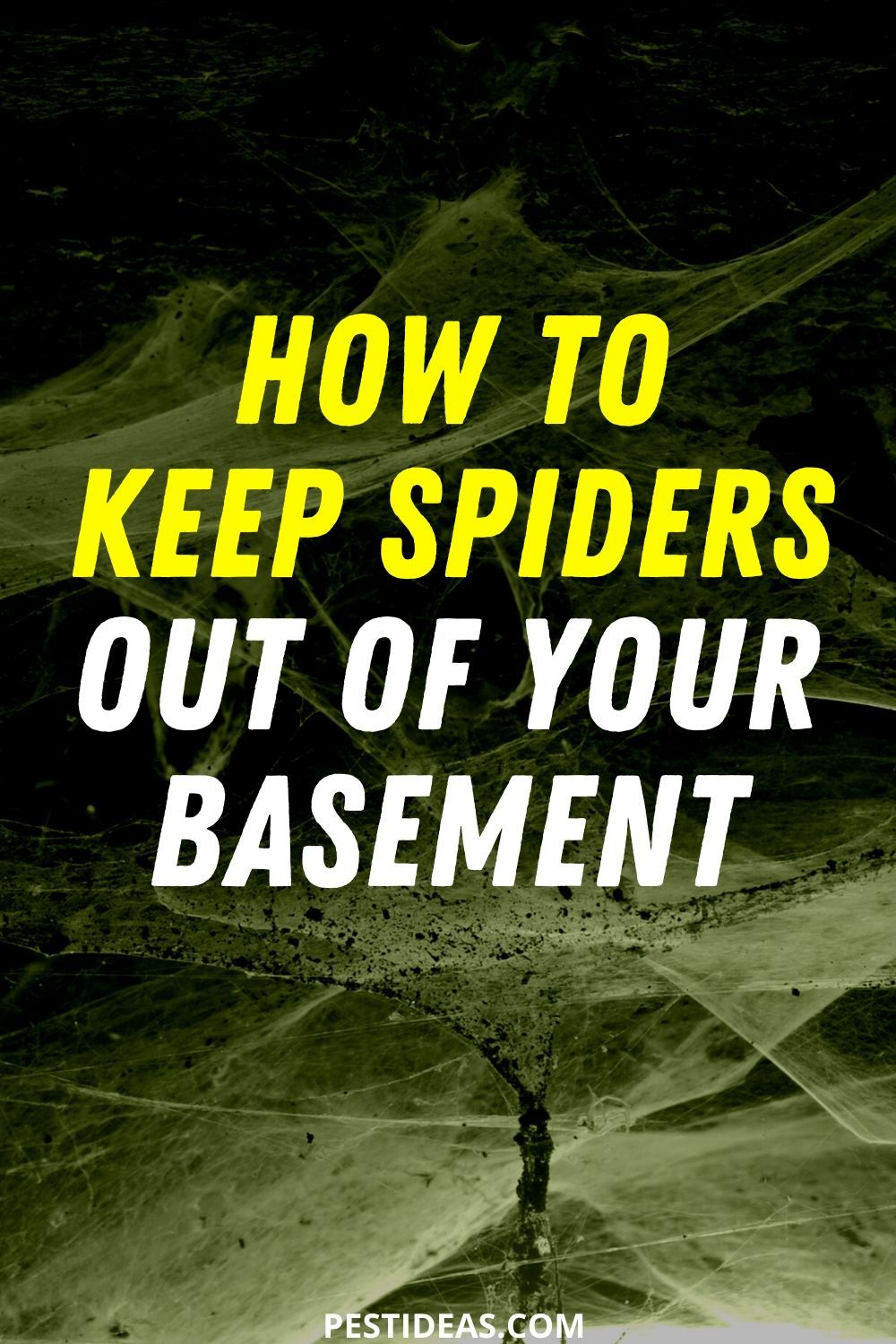 Get rid of spiders in your basement in 2020 get rid of