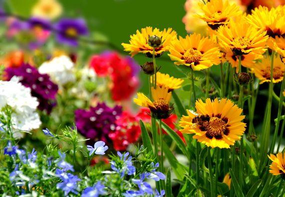 Blumenbeet Gestalten Tipps Zur Farbkomposition Obi Garten Gartendekor Sommerblumen