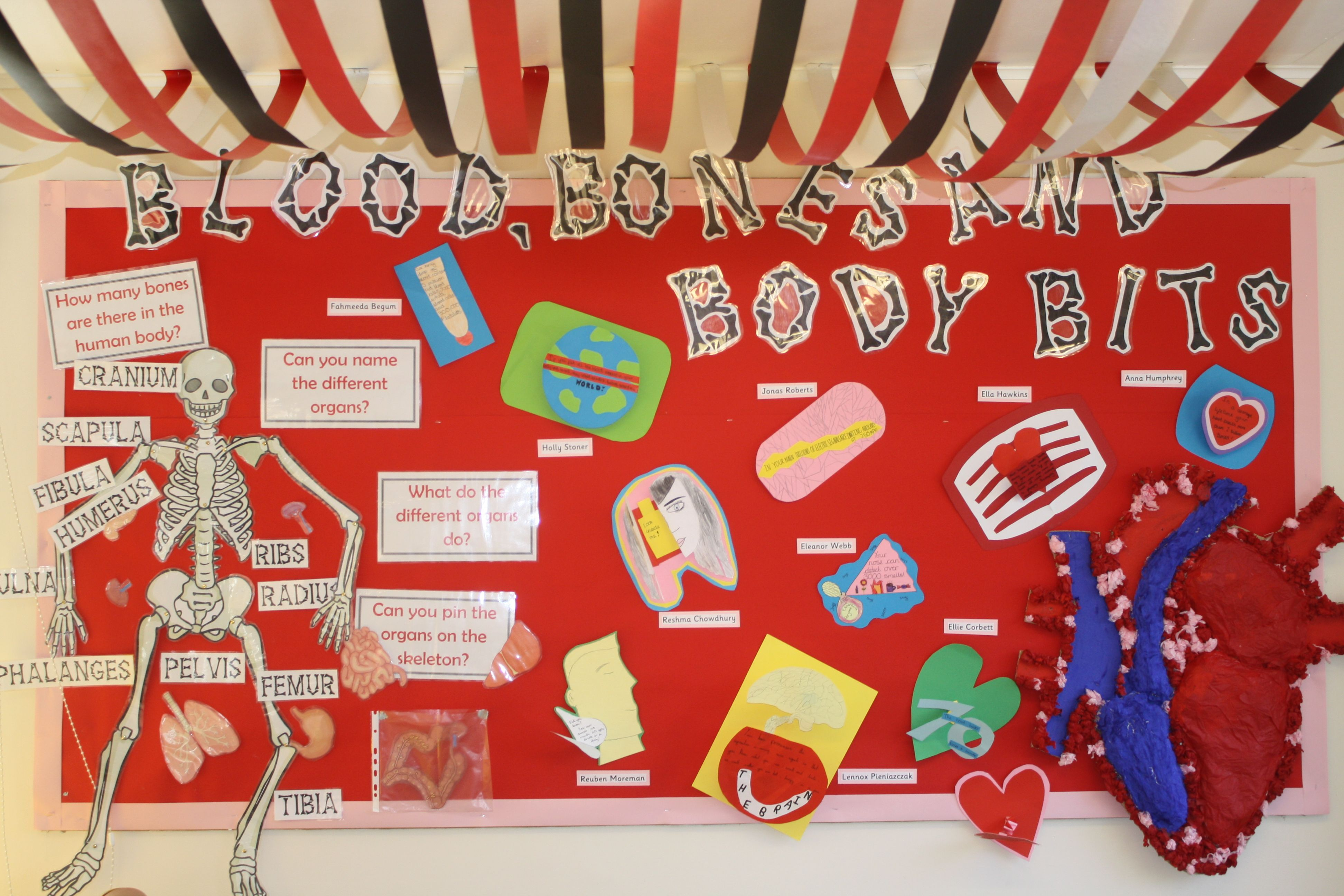 Year 6 Blood Bones And Body Bits Human Anatomy