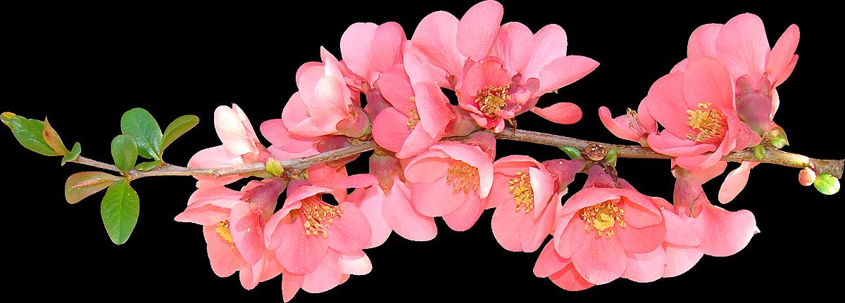 Real Flowers Png 67185691-flower-clipar...