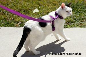 Walking Your Cat Outside