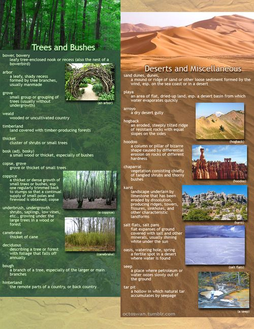useful geographical descriptions for writers: part 2 - trees, bushes, deserts, and miscellaneous
