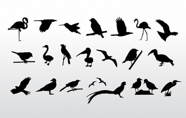 Birds Collection with gray background like crane sparrow crow duck