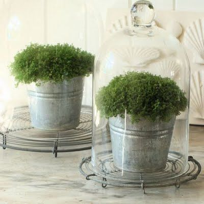 Cute little artificial plants... to brighten up all those little nooks and crannies! To purchase some top quality artificial plants at fantastic prices have a look on our website, for even more ideas and inspiration! www.evergreendirect.co.uk