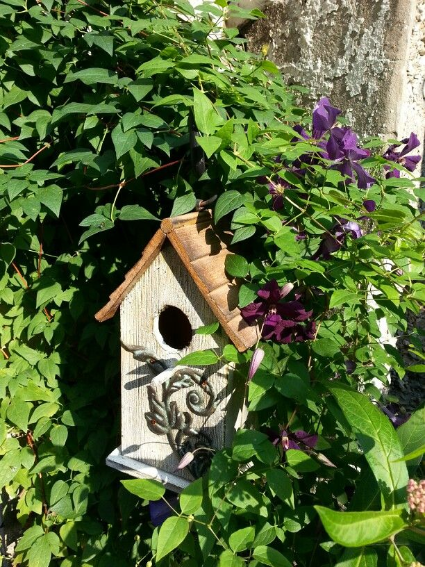 Polish spirit clematis wrapping itself onto a bird house.