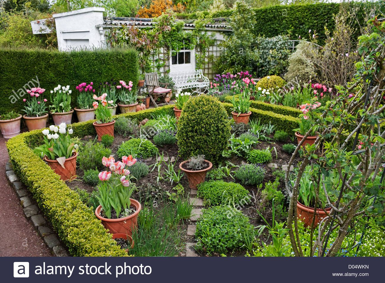 Potager Garden With Herbs And Tulips In Containers Roscullen Edinburgh Scotland Stock Photo Potager Garden Garden Design Plans Garden Design