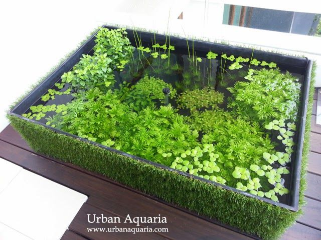 108 litre puddle garden outdoor balcony pond page 2 for Aquarium fish outdoor pond