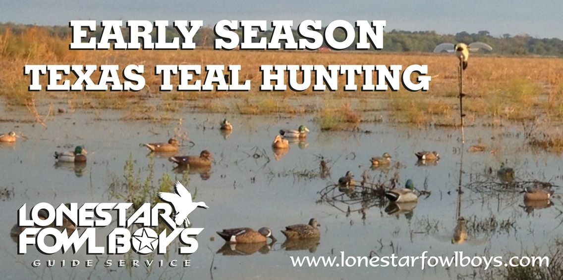 Blue wing teal season duck hunting waterfowl hunting duck