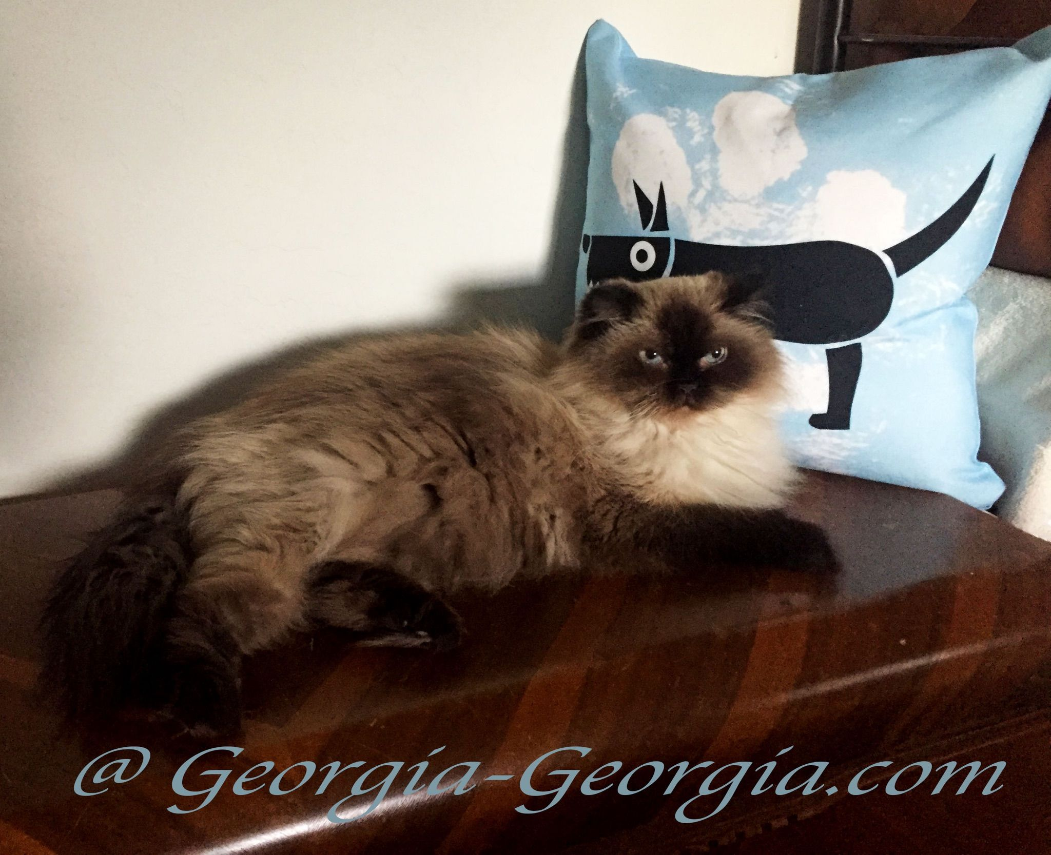 "Caught sleeping with a Dog ..... Pillow!   Scooter ""Doggedly"" pursuing a Caturday catnap    It's reigning Cats and Dogs @ Georgia-Georgia.com   ………. #Cat #Dog #Pillow #ThrowPillow #Caturday #Catnap #HimalayanCat #Himalayan #Ragdoll #Weekend #Saturday #Kitten #Puppy #Caturday"