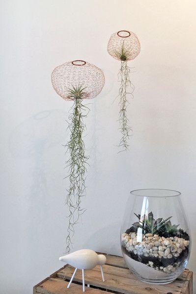 Deko-Objekte - Kupferdraht Jellyfish Luftpflanzen - Größe S - ein