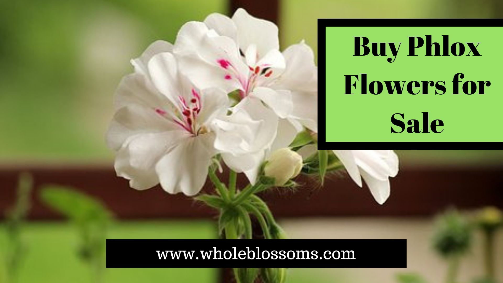 Phlox Is Thick Columns Greatest Filler Flowers They Are Used For Any Flower Arrangement Wedding Bridal Bouquet Or Table Centerpieces