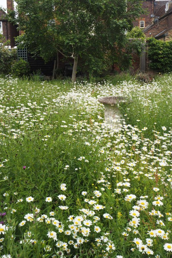 Photo of How to create a beautiful mini meadow garden – the medium-sized garden …
