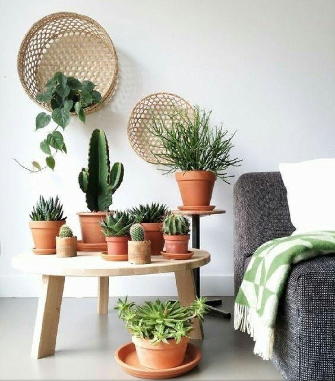 Home decor plants ideas  Pin by Henrike Heerink on Woon en eetkamer  Pinterest  Plants