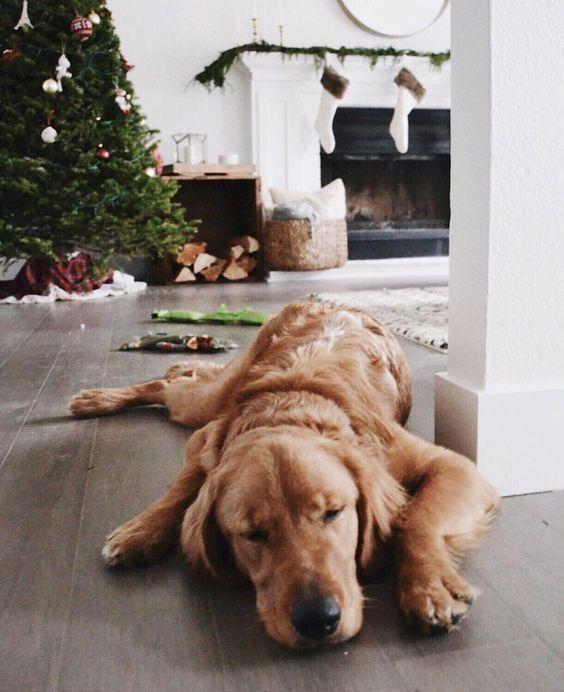 I N S T A G R A M EmilyMohsie Dog love, Golden