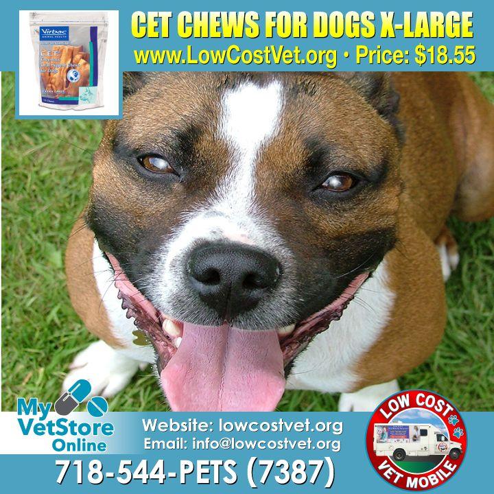 Www Lowcostvet Org Mobile Vet Veterinary Services Vets