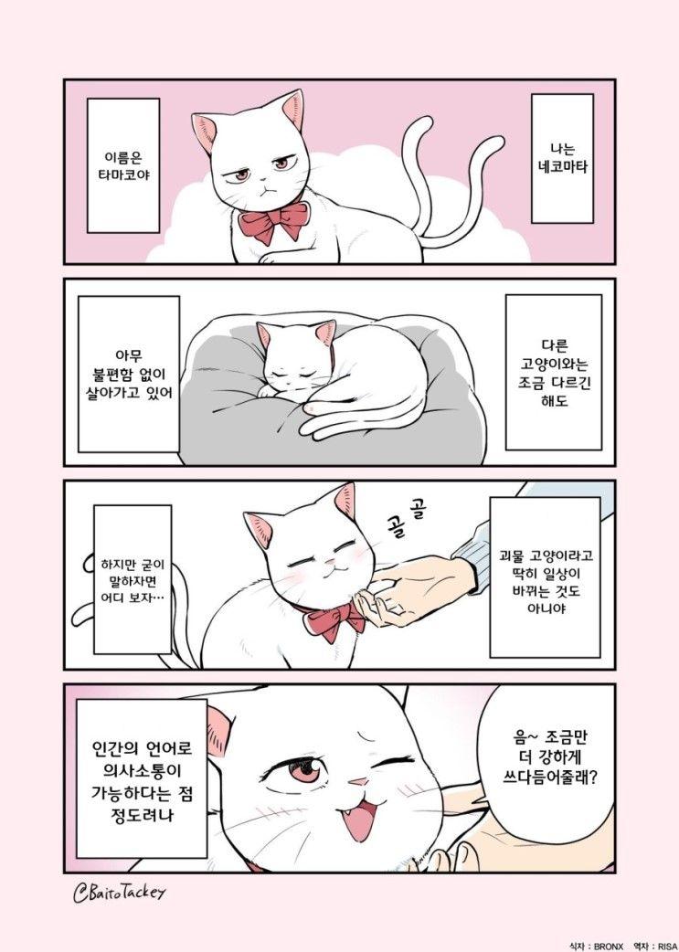 Risa 사람에게 길러지는 네코마타 이미지 포함 고양이 만화 캐릭터 일러스트 귀여운 만화
