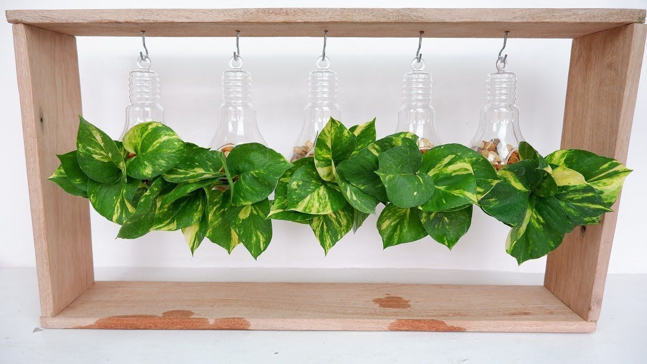 Money Plant Pothos In Plastic Clear Glass Bulb And Wooden Frame For Desk Table Decoration Youtube Plant In Glass Glass Bulbs Plant Decor