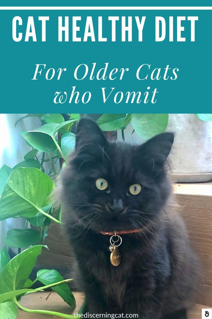Older Cat Healthy Diet To Minimize Vomiting In 2020 Cats Cat Parenting Sick Kitten