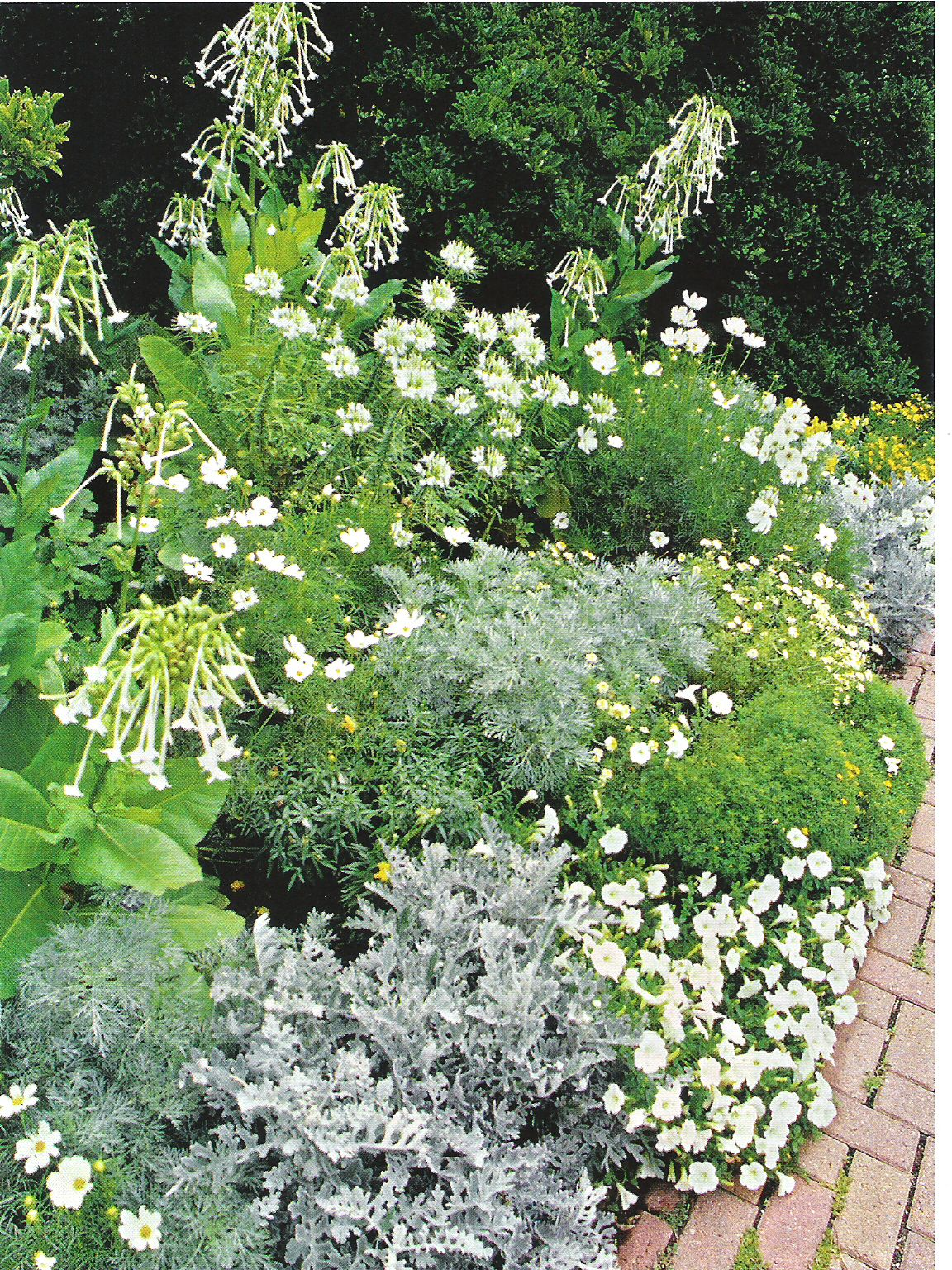 love the combination of white and silver plants.  might add a touch of darker green foliage to really make things pop.