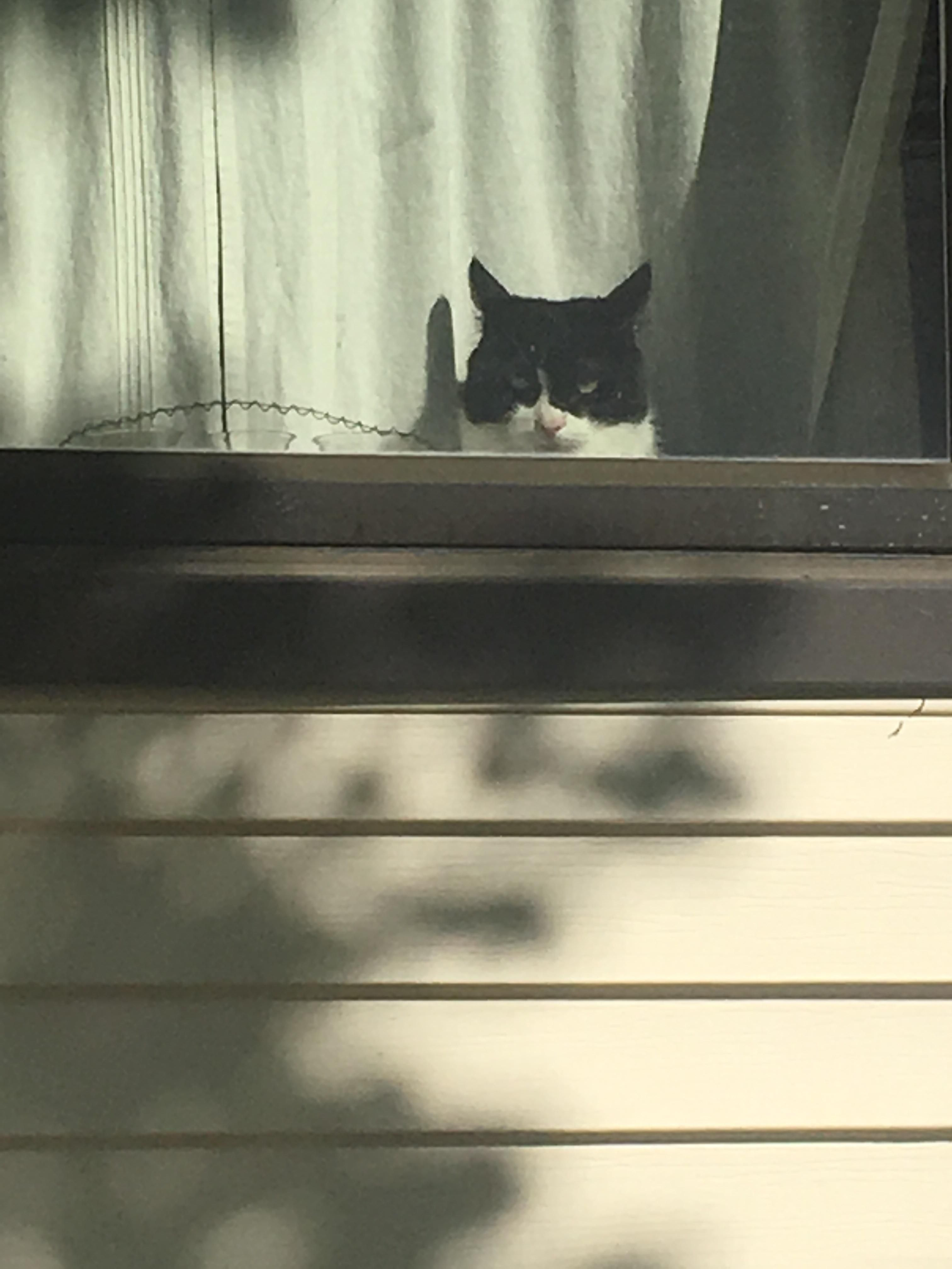 I think my neighbors cat is plotting to kill me. Everyday he/she gives me this look. http://ift.tt/2pH7vwx